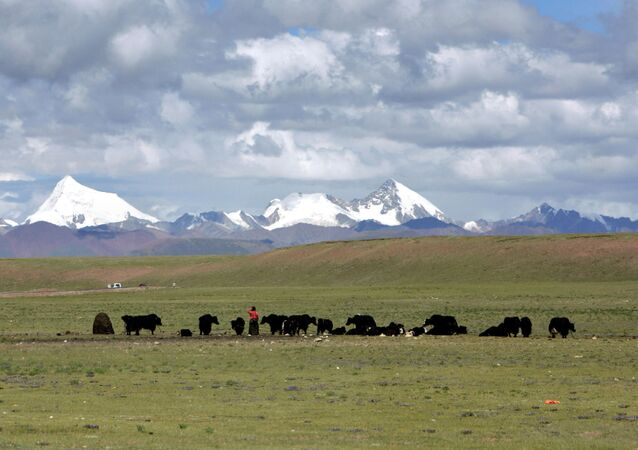 Tibetans graze their yak in the grasslands of the high Tibetan plateau in the county of Naqu, Tibet, China in this Thursday July 6, 2006 photo.