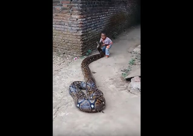 Child Plays with Patient Python
